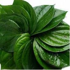 Betel Leaf / Pan  (Fresh)  10 pieces 350 yen